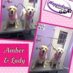 amber-and-lady