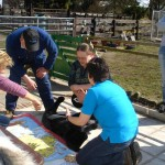 Canine-First-Aid-039