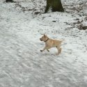 Loving the snow in the park!