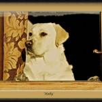 holly-thru-window
