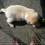 pups-2006013