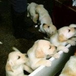 stan_puppies
