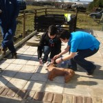 Canine-First-Aid-008