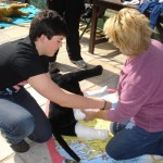 Canine-First-Aid-083